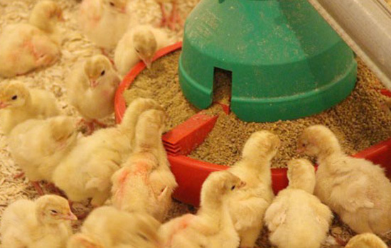 Image result for poultry feed